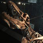 上野の恐竜博2016に行ってきた!子連れで行くならぜひともオススメしたいのは